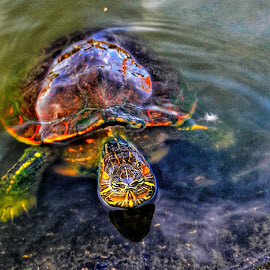 Turtle by Franco Tarelli - Animals Other ( #water, #phonephoto, #psicodelic, #colors, #turtle )
