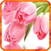Tulip Live Wallpapers