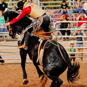 Going Up by Jim Moon - Sports & Fitness Rodeo/Bull Riding ( cowboy, cowgirls, whisper river photography, cowboys, rodeo images, saddle bronc rider, rodeo, jim moon, public, saddle bronc )