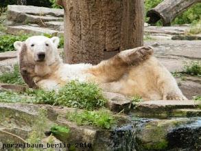 Photo: Knuts Blick zu den Besuchern ;-)