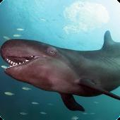 False Killer Whale LWP