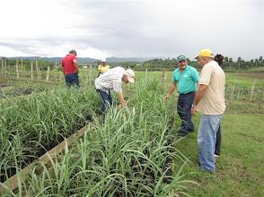 Photo: System of Sugarcane Intensification (Sistema de Caña de Azúcar Sostenible - SiCAS) 2012 [Photo by Rena Perez]