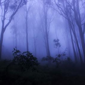 Nandi Hill by Shubhendu Bikash Mazumder - Landscapes Mountains & Hills ( landscape,  )