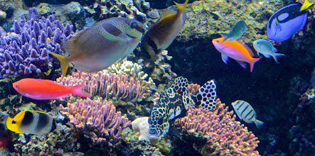 """Photo: 31. There are, of course, many colorful fish to see, that is if you don't mind oodles of young children telling their parents, """"Look, there's Dory!"""" (from the movie Finding Nemo)"""