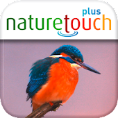 Identify live bird songs, naturetouch
