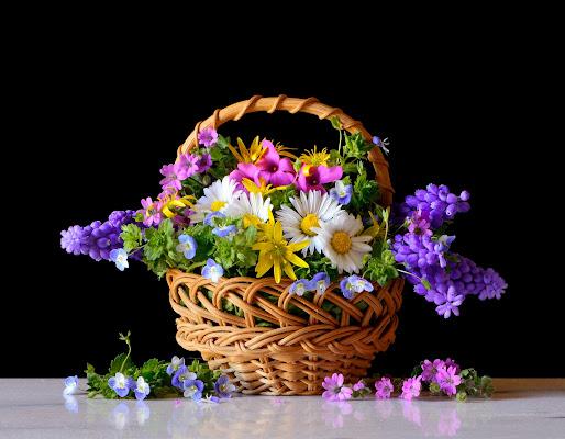 primavera di Hesse