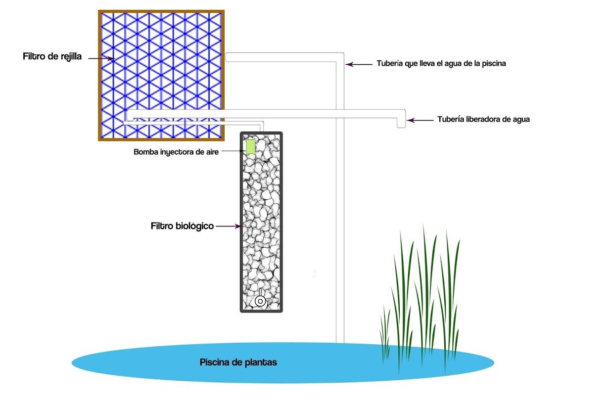 Esquema del sistema de filtrado de piscina natural