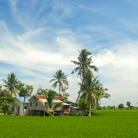 Village house and paddy field by Zam Foto - Landscapes Prairies, Meadows & Fields ( rice, coconut, vintage, green, paddy, traditional, architecture, house, landscape, field, farm, sky, tree, village, blue, cloud )