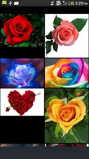Rose - náhled