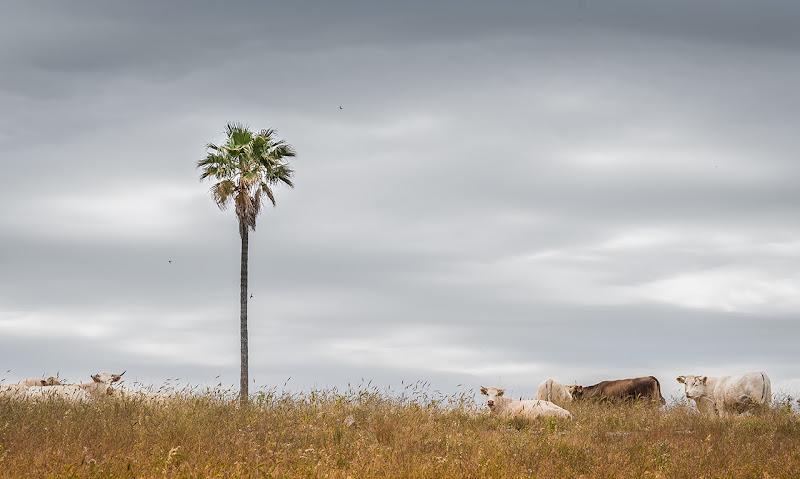 Vacanze bovine di Salvatore Gulino