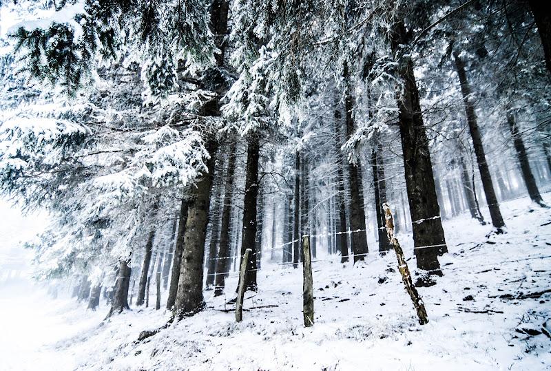 Il silenzio della neve di barte97
