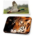 Real Animal Sounds Game icon
