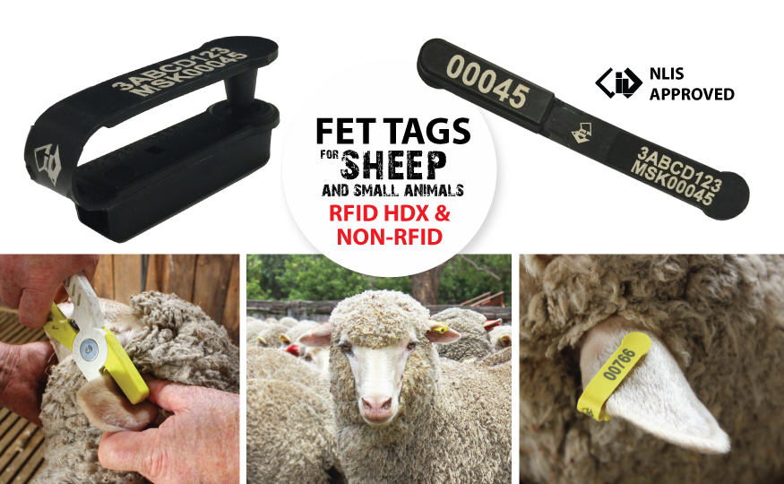FET Tags Sheep