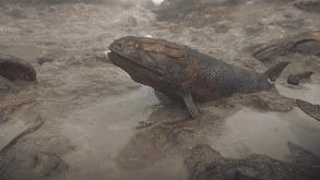 The Devonian thumbnail