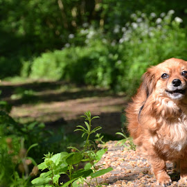 Dog loves being outside by Els He - Animals - Dogs Portraits ( nature, outside, walking, happy dog, dog, summer,  )