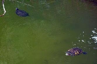 Photo: Żółwie na wyspie Małgorzaty