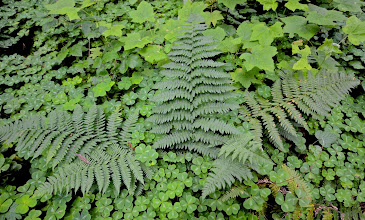 Photo: 175. Lots of ferns around the water ...