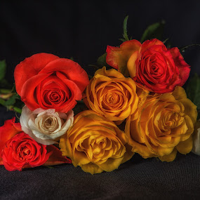 Rose bunch by David Guest - Flowers Flower Arangements