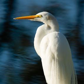 by Wilson Silverthorne - Animals Birds ( florida, birds,  )