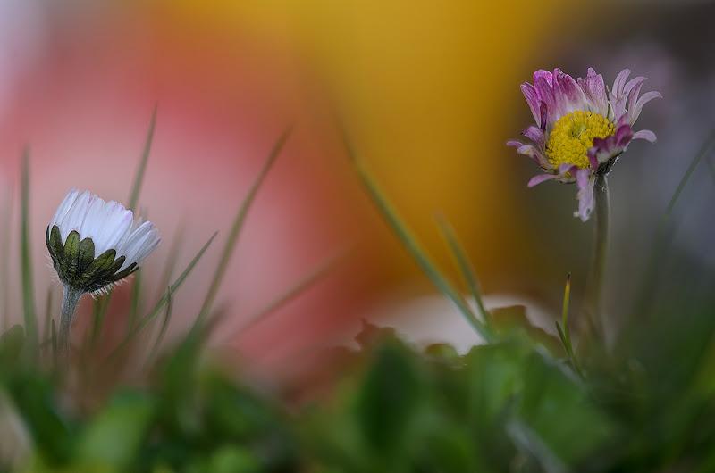 Un saluto alla Primavera di www.fioregiallophoto.it