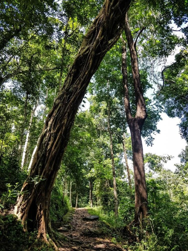 dandeli+forest+reserve+karnataka.jpg