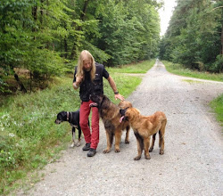 Photo: Luna, Aramis und Da Vinci (August 2014)