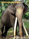 Discover-sri Lanka
