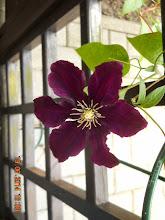 Photo: 19 VI 2014 roku - taki sobie kwiatek.............