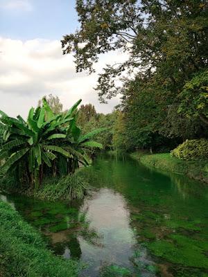 Verde lussureggiante di alessiag2473