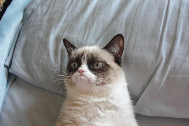 grumpy-the-cat
