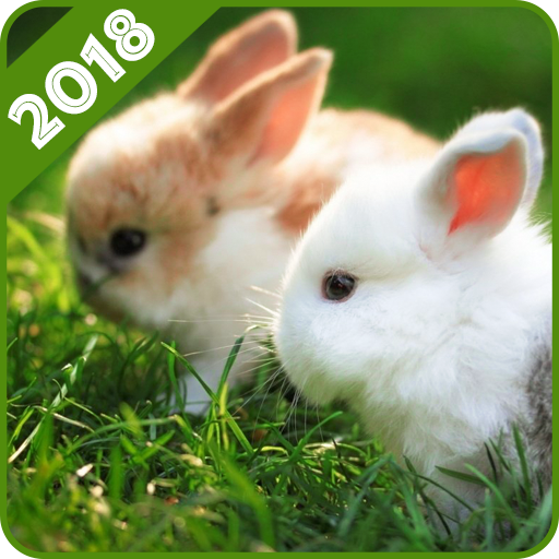 Rabbit Wallpaper Android APK Download Free By Dudly World