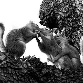 by Veli Toluay - Black & White Animals