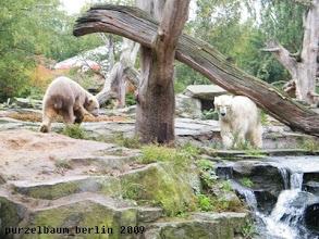 Photo: Knut und Gianna umkreiseln den Baum ;-)