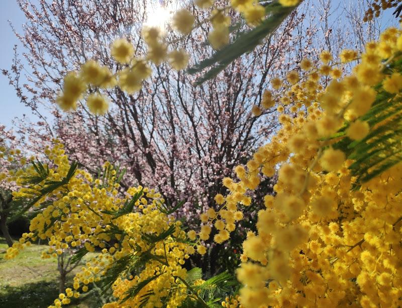 Primavera in anticipo di Fefa