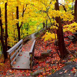 Footbridge through the foliage by Michael Lee - Landscapes Forests ( #hiking #trail #fall #foliage #nature )