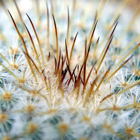 Close-up look at spikes that are deadly by BoonHong Chan - Nature Up Close Other plants ( samsung )