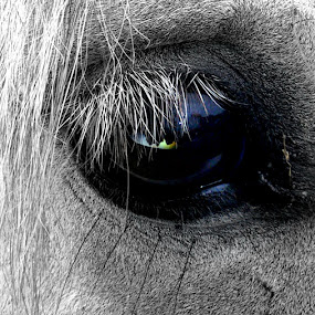 Eye see you by Yvette O Beirne - Instagram & Mobile Android ( horse eye )