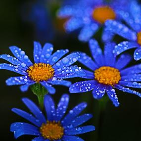 by Kym George - Flowers Flower Gardens (  )