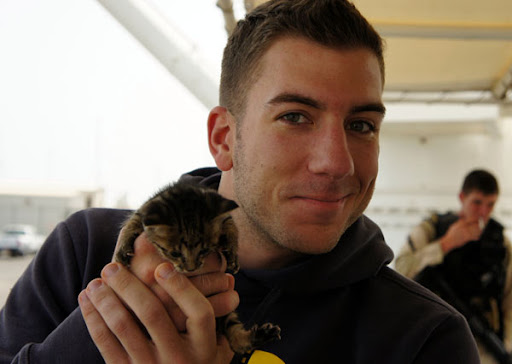 cute rescue tabby kitten and navy sailor