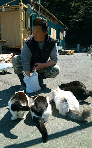 man feeds cats after japan earthquake tsunami tashirojima island