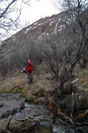 Bushwhacking through Denali National Park
