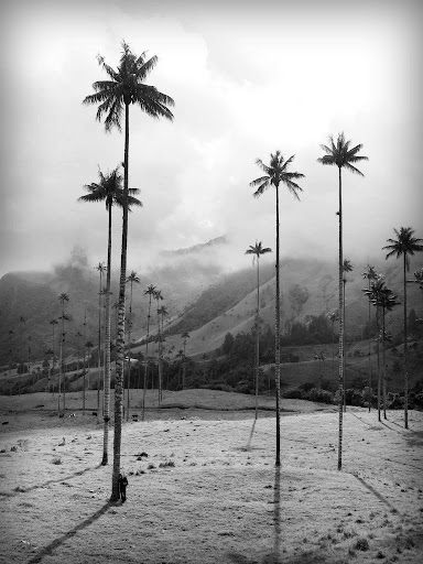 Jack next to a wax palm tree in Valle de Cocora