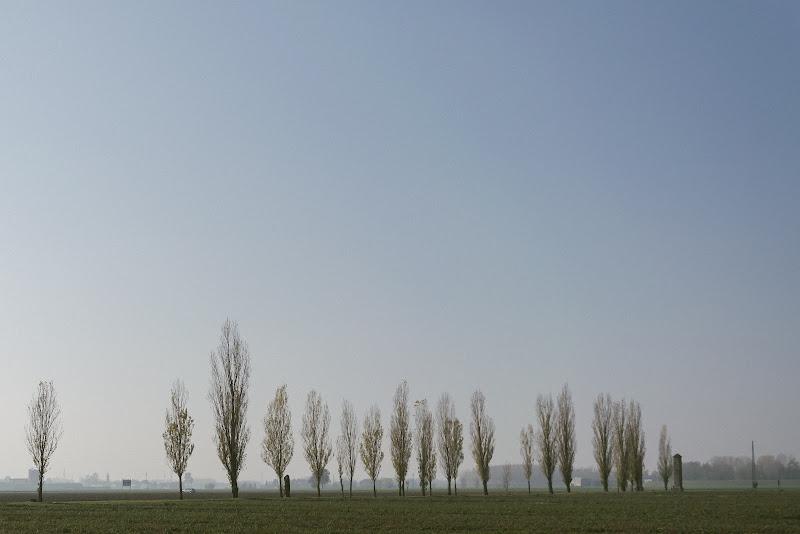 Pioppi Tremolini. di MicheleCarrano