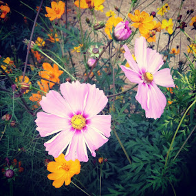 Wildflower by Katie March - Instagram & Mobile iPhone