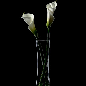 by Paige Engel - Artistic Objects Other Objects ( vase, calla lilies, glass, dark, commercial )