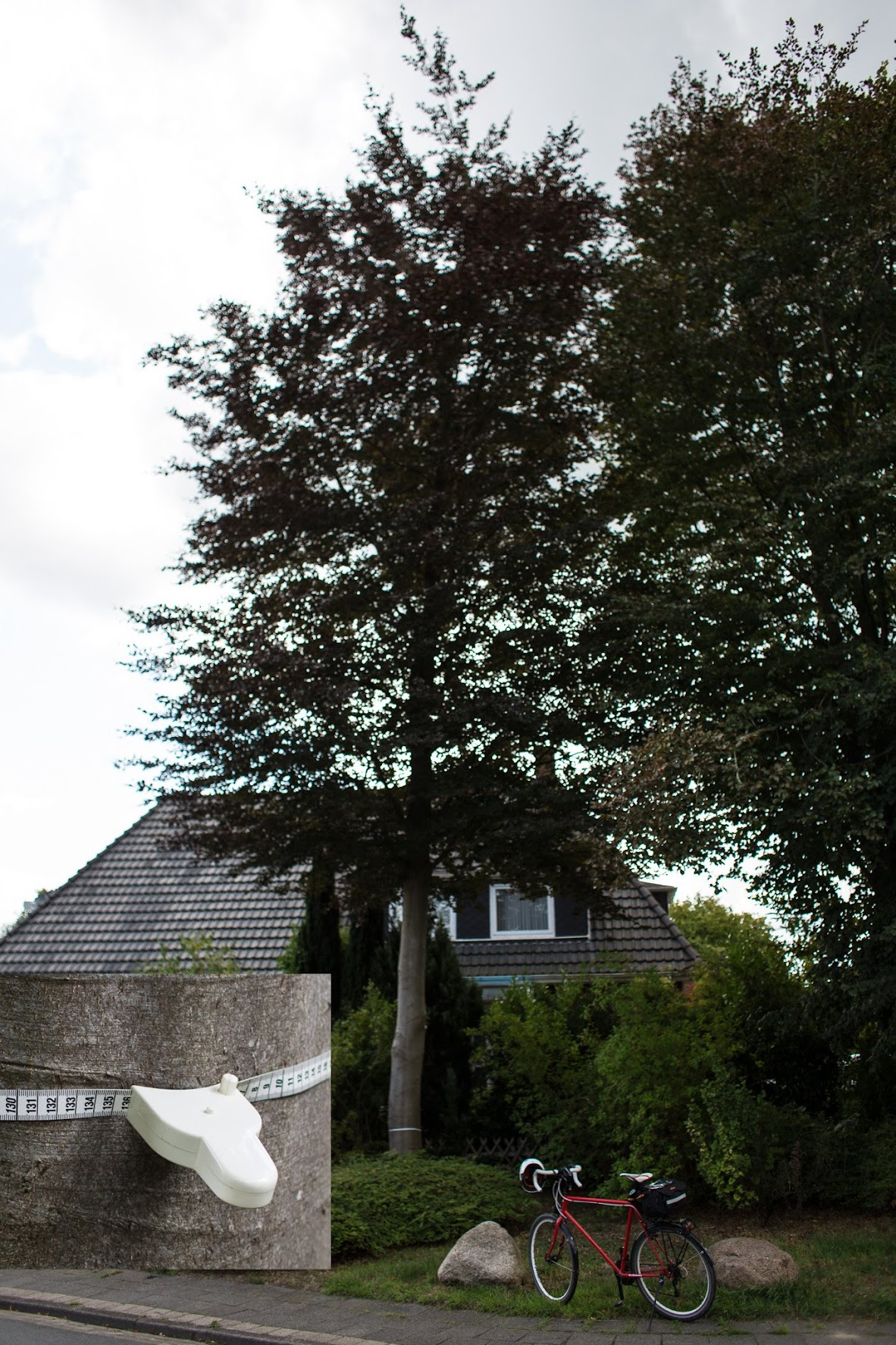 Baumschutzsatzung Osterholz-Scharmbeck - Buche