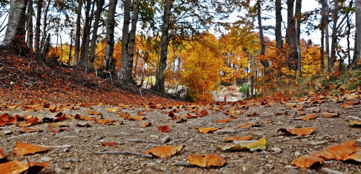 Sentiero d'autunno di titi15