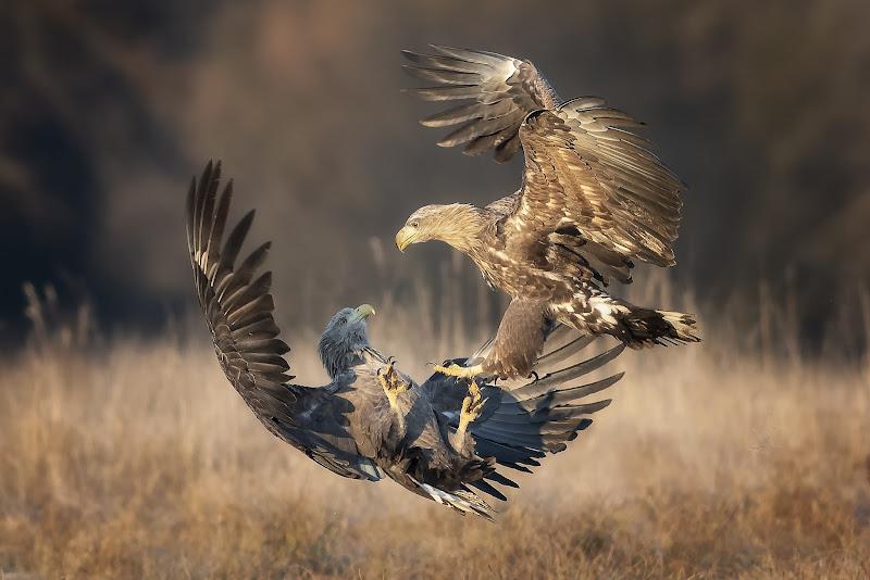 Combat in fly di Mauro Rossi
