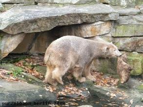 Photo: Knut spaziert mit dem Jutesack zum Wassergraben ;-)