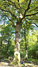 Photo: Le célèbre chêne centenaire des Missions dans la forêt de Meudon -Guide de balade à vélo de Sceaux à Meudon par veloiledefrance.com.